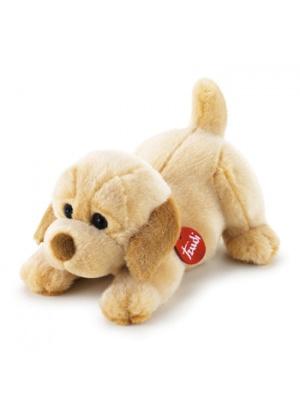 Labrador Joe couché bébé