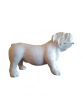 Bull Dog Chicago Blanc