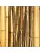 tige bambou