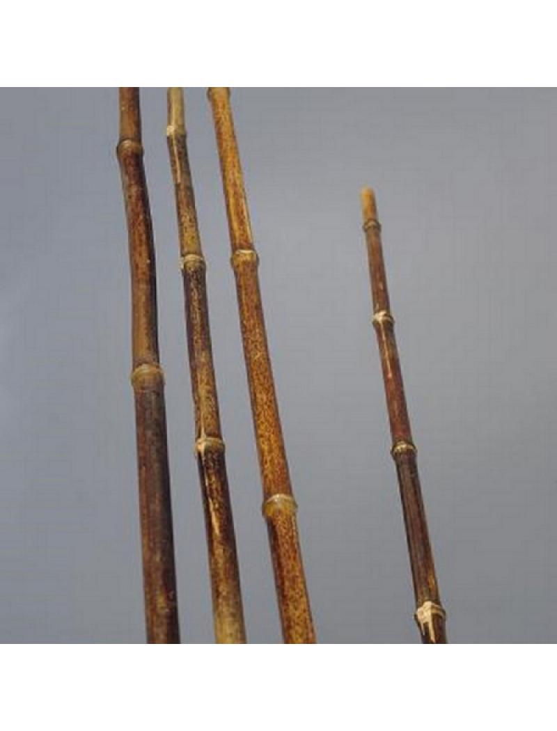 Bambouland Lot de 10 tiges bambou noir naturelles diamètre 2 cm