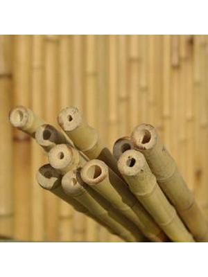 Lot de 10 tiges bambou naturelles diamètre 2 cm