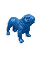 BullDog Américain XXL debout Bleu