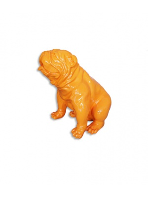 Bull dog US Assis Orange