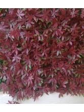 Plaque carré en vigne vierge rouge