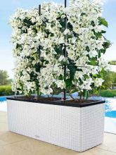 Jardinière Cottage Trio Blanc