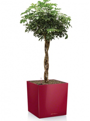 Pot Cube Premium Rouge brillant