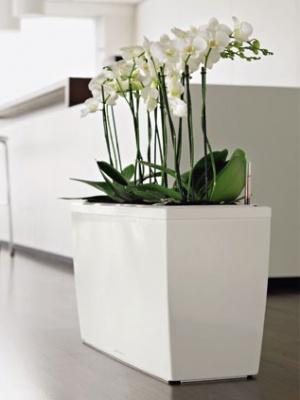 Pot Cararo blanc brillant avec set d'arrosage