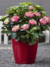 Grand pot Classico premium rouge brillant