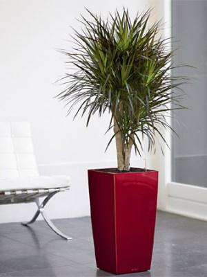 Pot Cubico premium Rouge brillant