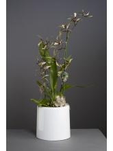Pot orchidée terrestre blanc opaque