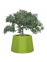 Pot Sardana - Vert
