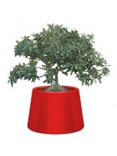 Pot Sardana - Rouge