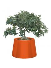 Pot Sardana - Orange