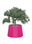 Pot Sardana - Fuchsia
