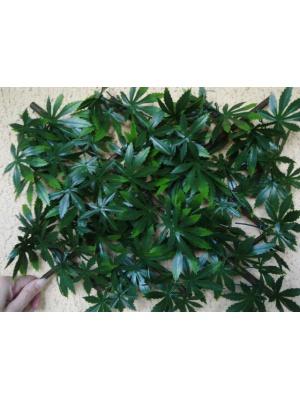 Treillis feuilles vignes vierges vertes