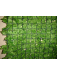 haie feuilles