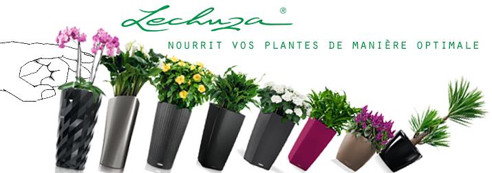 Découvrez la collection de pots Lechuza, des pots à réserve d'eau design pour l'intérieur